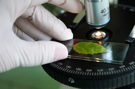 laboratory glass: scienziato osservati foglia verde in vetro di laboratorio Archivio Fotografico