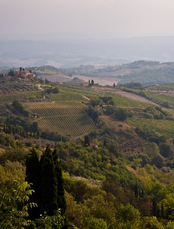 Tuscany   vineyard Stock Photo - 7899331