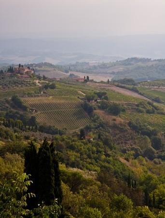 Tuscany   vineyard Stock Photo - 7899331