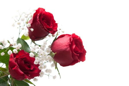 red roses on white Stock Photo