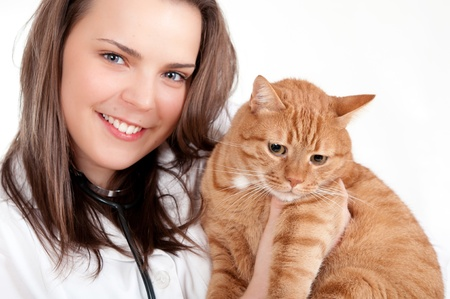 veterinary medicine: Vet and cat Stock Photo