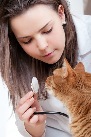 Vet and cat photo