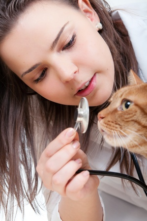 Vet and cat Stock Photo
