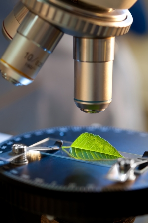 observation of a green leaf with a microscope Stock Photo - 10627795
