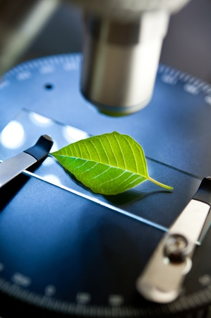 applied: observation of a green leaf with a microscope