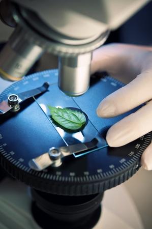 microscope: observación de una hoja verde con un microscopio