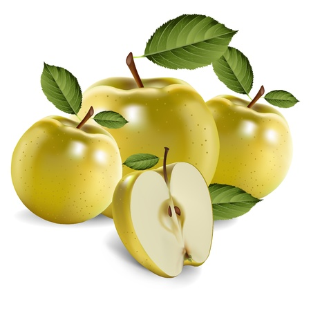 Green apple fruits and half of apple Vector