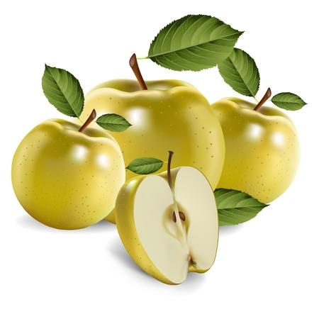 Green apple fruits and half of apple Illustration