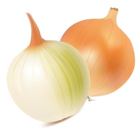cebolla blanca: Cebolla sobre un fondo blanco