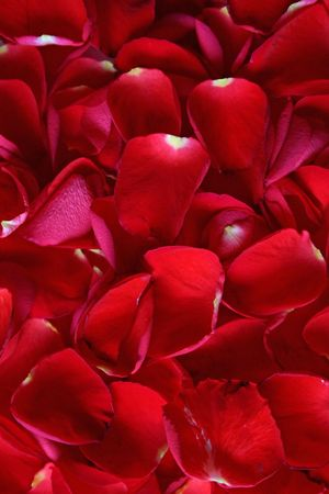 all love: Foto per tutte le manifestazioni di amore e di festa con momenti molto speciali.