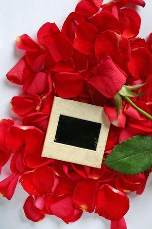 all love: Foto per tutto l'amore e gli eventi festivi, con momenti davvero speciali.