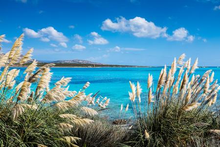 La Pelosa Beach, Sardinia 스톡 콘텐츠 - 123322038