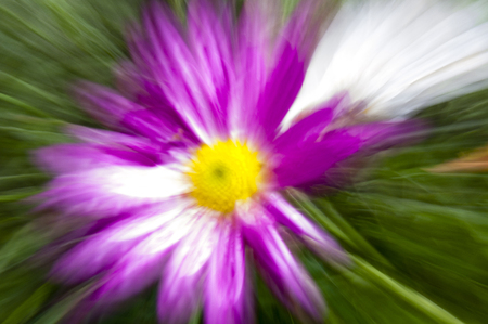 A free fantasy of colorful flowers