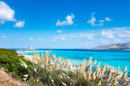 The beautiful Pelosa beach in Stintino in Sardinia, with the tower in the background 스톡 콘텐츠