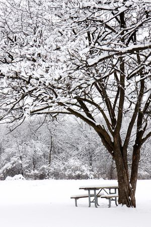 snow gently falls on picnic bench in foreset preserve photo