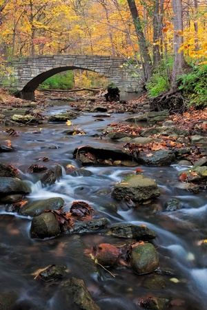bridge in the forest: a tranquil stream meanders under a footpath and through the woodland. a forest preserve near chicago, cook county illinois awakens in autumn colors carrying fallen leaves downstream.