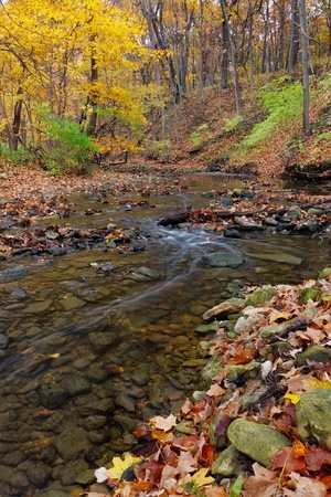meanders: a tranquil stream meanders through the woodland. a forest preserve near chicago, cook county illinois awakens in autumn colors carrying fallen leaves downstream.