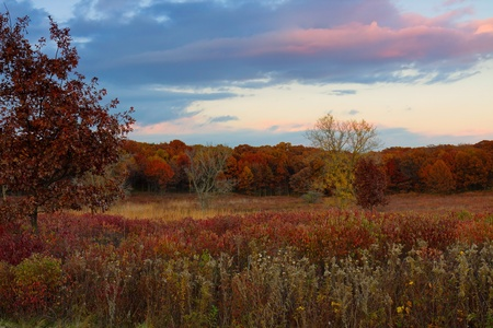 colorful prairie change into oak savanna. the blue and pink hues of the sunset sky are the backdrop for the changing colors grass and woodlands. Banco de Imagens