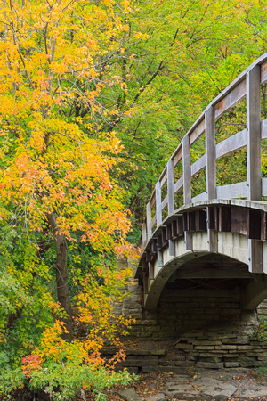 acer saccharum: The wooden rails of a arching bridge lead into a colorful autumn maple forest. Stock Photo