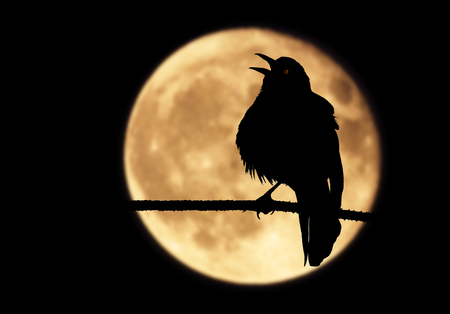 warble: A silhouette of a raven perched on a branch with its beak wide open. The bird, framed by a full moon, shrieks into the moonlit night while emitting a mysterious red glow from its eye.