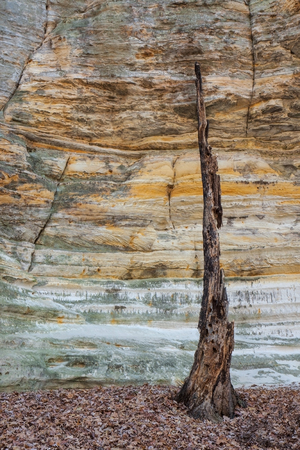 Deep inside Illinois Canyon, the glowing St. Peter Sandstone cracked walls surround a burnt-out tree. Once a home to birds, insects and small animals, the charred tree truck now precariously rises above fallen autumn leaves in an attempt to make its last stand. Foto de archivo