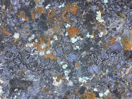 A beautiful texture of living and dying lichen growing on a limestone rock at Dewey Nelson State Park in Wisconsin.