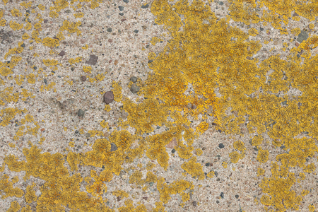 A beautiful texture of living and dying  lichen growing on a limestone rock in Bayfield Wisconsin. Reklamní fotografie