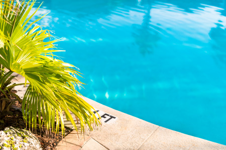 Detail of swimming pool and deck with palm tree landscaping