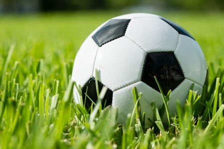 soccer ball on grass: Black and white traditional soccer ball football futbol on grass