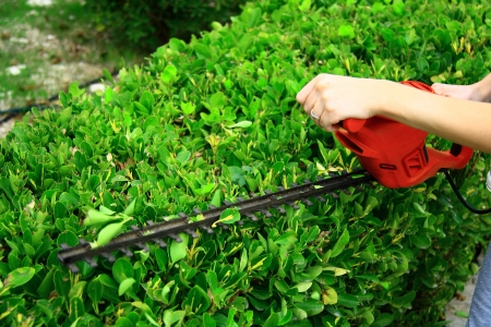 worker pruning shrub in garden with electrical pruning tool
