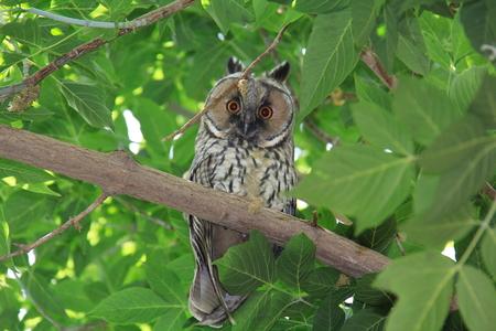 bewildered: bewildered owl looking on tree