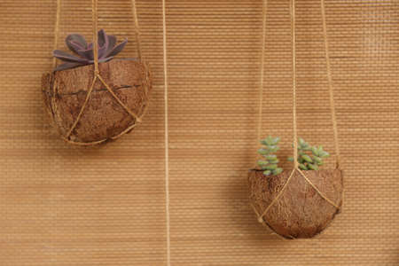Creating pot for flowers from coconut new idea
