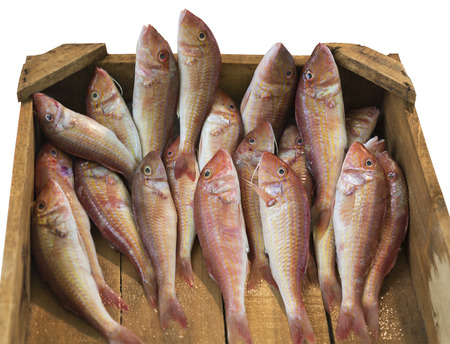 goatfish: fresh surmullet in a wooden box on the white background