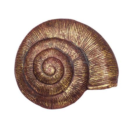 espiral: bonita concha de oro grande yeso decorativo con fondo blanco Foto de archivo