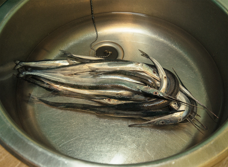 brackish water: a lot of needle fish with water in a metal washbasin Stock Photo