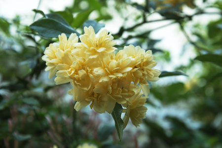 yellow flower in a bush and green leaf