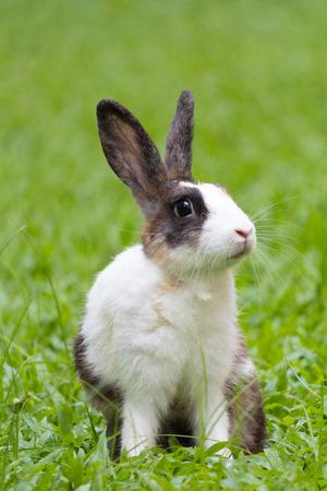 Happy bunny on grass