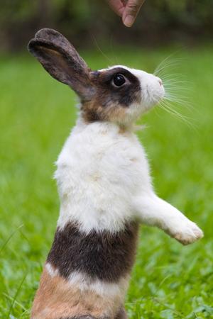 lapin: Joyeux lapin sur l'herbe