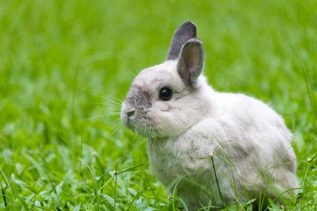 lapin: Happy bunny on grass