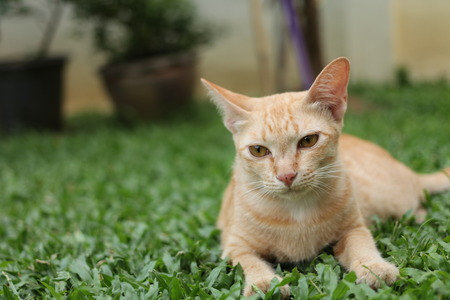 YellowGinger cat relaxing in the park