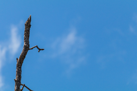 Withered tree with blue sky in the background.