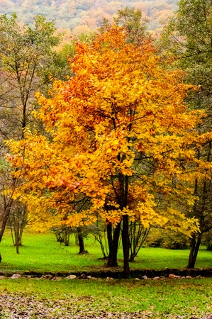 Autumn with its beautiful colors on the trees in the park Stock Photo