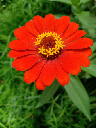 The orange Marigold.