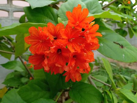 The Bouquet of orange flowers.