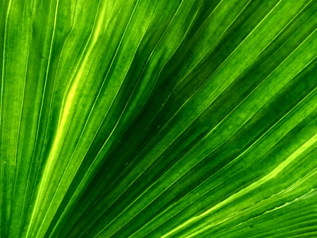 Close up palm leaves.