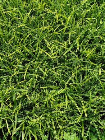 Pattern of Ornamental plants leaves.