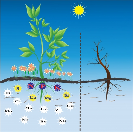 fertilizers: Background for teaching nutrition for plants