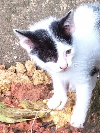 eye: Baby cat