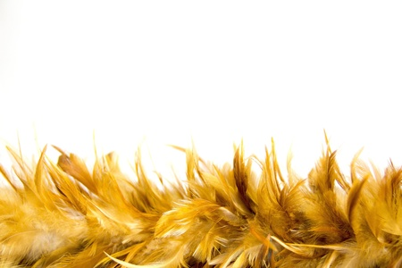 feathery: chicken feather background with a soft texture
