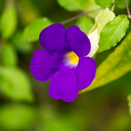 purple flowers grow beautiful house plants stock photo picture and royalty free image image 21905323 - Flowering House Plants Purple